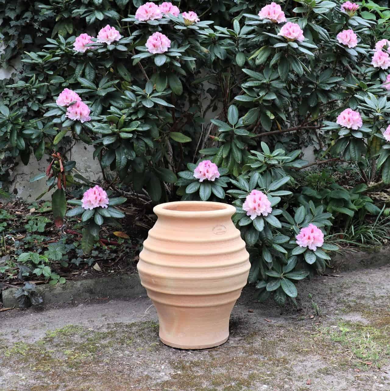frostsichere terracotta Amphore Agave Garten